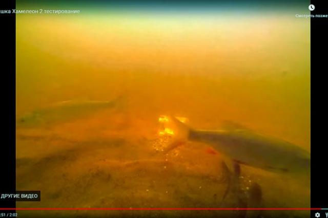 Кормушка Хамелеон подводная съемка